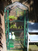 plantenkas met tomaten, pepers en nog iets groens